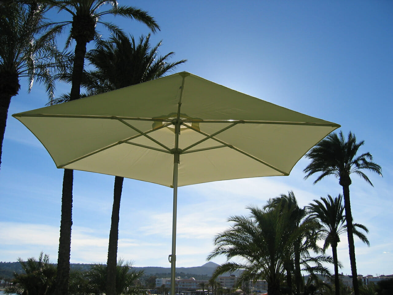 P50 Umbrella with palm trees in the background