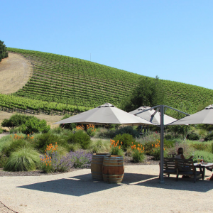 niner wine estates with p6 square trio umbrellas shading an outdoor seating area